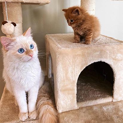 Cheese não podia se aproximar de Hank que rapidamente a gatinha saia de perto.