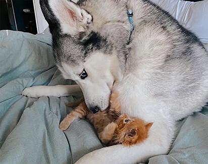 E o cão Aspen também não resistiu aos encantos da gatinha.