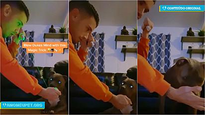 Dono brinca com o seu pit bull de mágica e cão fica eufórico ao perceber que a luz de laser desapareceu.