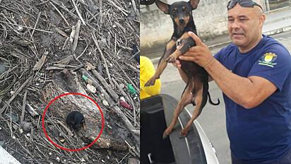 O cachorrinho foi resgatado por guardas civis municipais em Itapemirim, Espírito Santo.