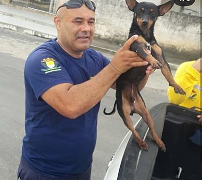 O animal foi resgatado com vida e descobriu-se que ele tinha dona e que estava desaparecido.