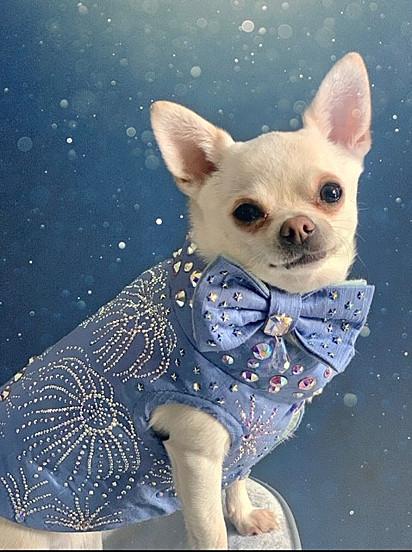 Romeo está noivo de Delilah, uma maltipom branca que modela para a Furdrobe.