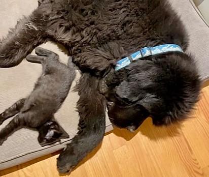 Os gatinhos foram resgatados em San José, na Califórnia (Estados Unidos).