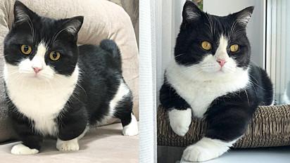 O gatinho de perna curta tem feito sucesso no Instagram pela sua fofura e carisma.