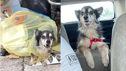 Cão idoso foi abandonado dentro de saco de lixo em Roma, Itália.