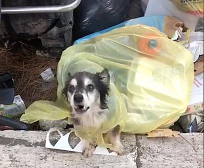 O cachorrinho deve ter rasgado a sacola e botado a cabeça e as patinhas para fora.