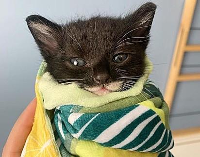 O gatinho passou meses na casa da voluntária Alyssa Masten.