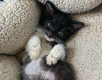 O gatinho Cloud foi resgato com seus irmãos pelo abrigo Anderson Animal Shelter.