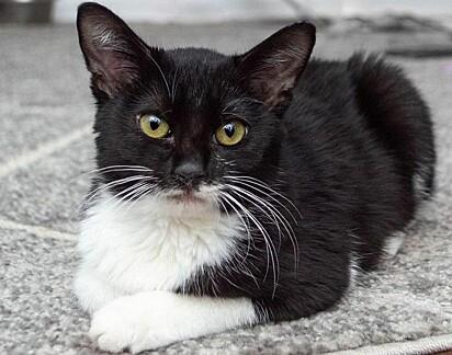 O gatinho tem crescido brincalhão e saudável.
