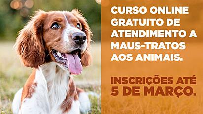 O curso é destinado a protetores independentes, integrantes de organizações da sociedade civil de proteção animal, técnicos das 399 prefeituras, médicos veterinários e zootecnistas do estado do Paraná.
