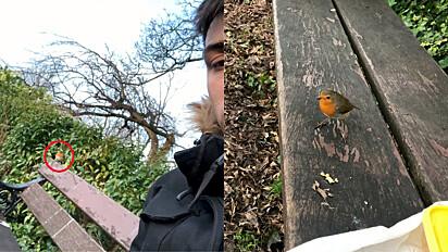 Por um ano o passarinho tem feito companhia ao jovem durante o seu horário de almoço.