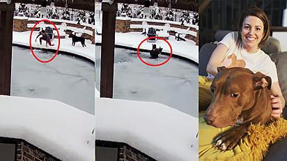 Mulher pula na piscina para salvar a vida do seu cachorro em Tennesse, Estados Unidos.