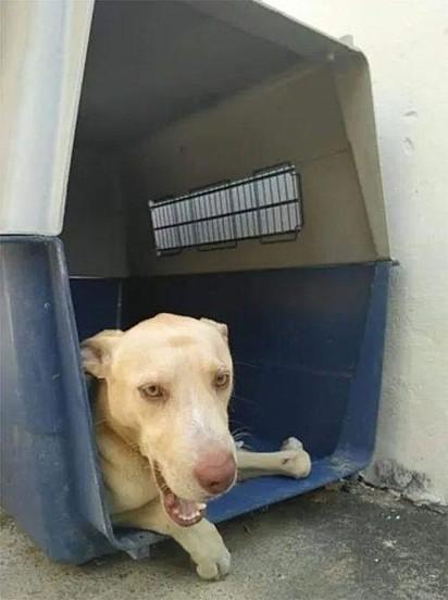 O cachorrinho não resistiu e acabou falecendo.