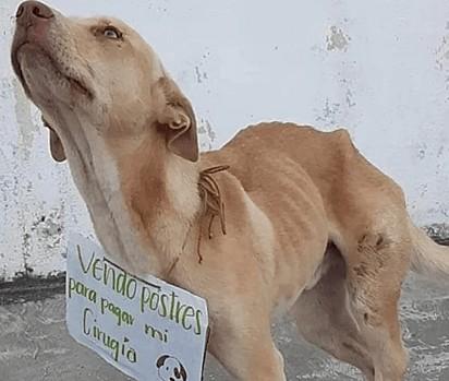 O cachorro Rex foi atropelado e necessitava urgentemente de cirurgia.