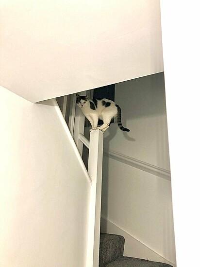 Pedágio do gato, para subir, precisa dar um cafuné.
