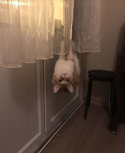Eu não estou de cabeça para baixo, você que está!