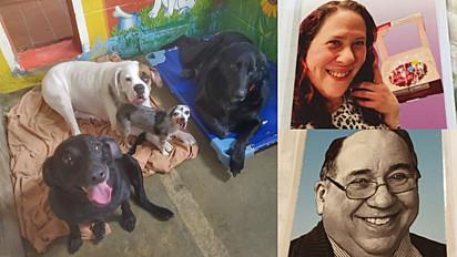 Os cães perderam a família para o Covid-19 em fevereiro de 2021.