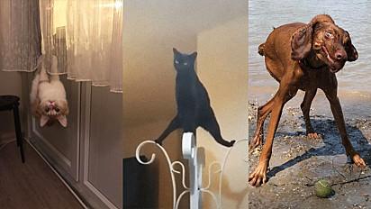 20 fotos de animais de estimação flagrados bugados.