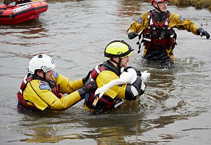 Foi necessário uma equipe para resgatar a cisne que se negava a deixar o seu companheiro.