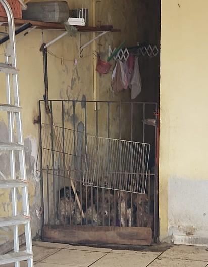 Mais de 30 cães entre as raças yorkshire e shih-tzu, estavam sob custódia de dois idosos que faleceram de Covid-19.