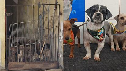 Os cães estavam sob custódia de dois idosos que faleceram de Covid-19 em janeiro de 2021.