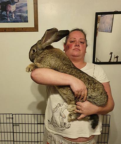 O coelho George com a sua dona Nicola Parkin.
