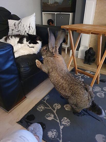 O coelho adora brincar com o gato da família.