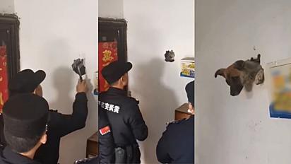 Policiais chineses são acionados para socorrer um cão que ficou preso em uma parede de gesso no dia 12 de fevereiro, assustado com os fogos de artifício do Ano Novo chinês.