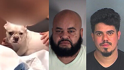 A cachorrinha foi submetida a uma cesárea ilegal e acabou morrendo junto com dois filhotes em Lake County, Estados Unidos.