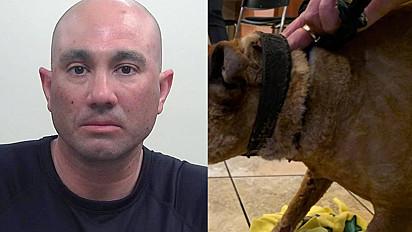 Homem é suspeito de maltratar por vingança o cachorro da ex-namorada em Utah, nos Estados Unidos.