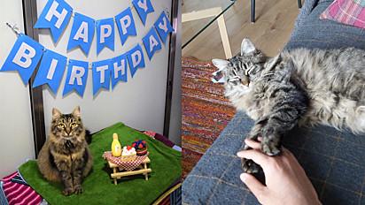 A gatinha recebeu uma festa de aniversário e ninguém compareceu. Depois de um mês ela foi adotada.