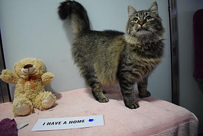 Monique já estava no abrigo há 121 dias e ninguém tinha o interesse de adotá-la.