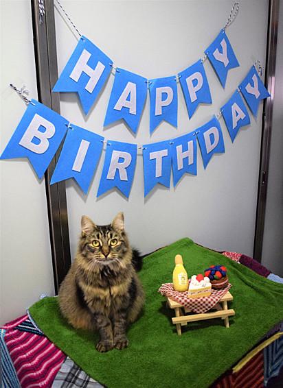 A gatinha Monique ganhou uma festa de aniversário em fevereiro de 2020 e ninguém compareceu.