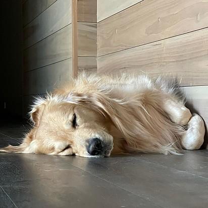 Seu carisma chama atenção até dormindo.