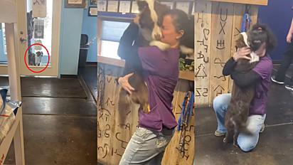 A cachorrinha Liddie havia desaparecido por 21 dias em Wyoming, nos Estados Unidos e o momento do reencontro com a sua dona Kirstin Kapp é emocionante.