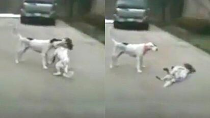 O vídeo foi compartilhado no TokTok, feito milhares de pessoas rirem.