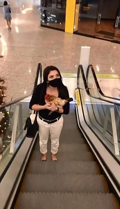 Cá Moreira e a galinha Lulu chamam a atenção passeando no shopping.