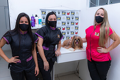 No mercado pet, mulheres são a maioria e faz o setor crescer a cada ano.
