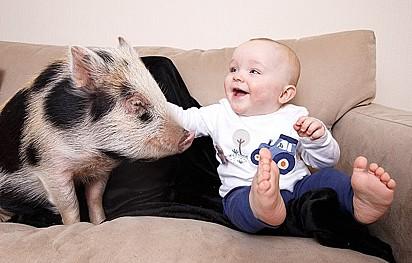 O bebê e a porquinha se tornaram inesperáveis.