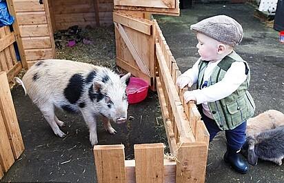 A porquinha adora estar perto do Teddy.