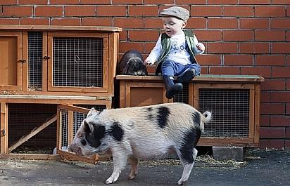Hannah presenteou o filho com uma porquinha, pelo fato dele amar o desenho da Peppa Pig.