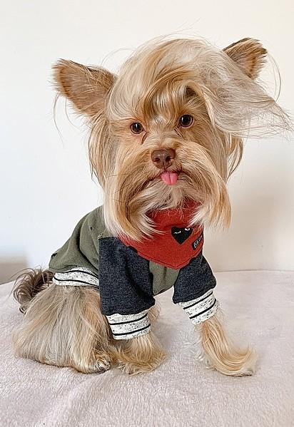 Adriana Kollar, diz que o pelo do seu cão tem vida própria, não para no lugar.