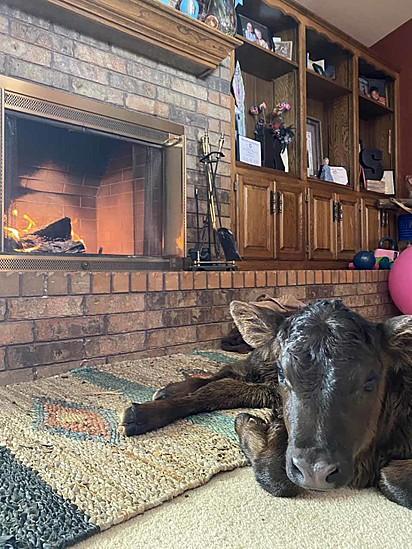 As pessoas tem abrigado os animais dentro de casa.