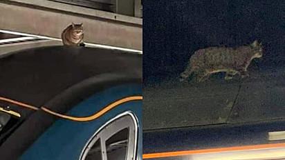 O felino foi encontrado no dia 2 de março na estação Euston de Londres, Inglaterra.