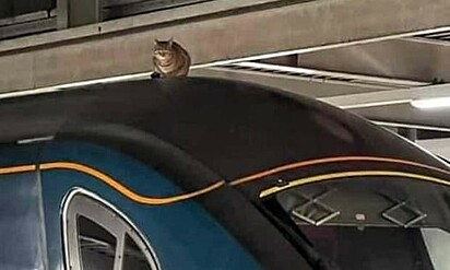 O gatinho se recusou a sair do local. A equipe da estação de trem levou duas horas e meia para resgatar o felino.