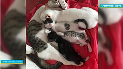 A felina amorosamente adotou o gatinho branco e todos da ninhada o aceitaram.