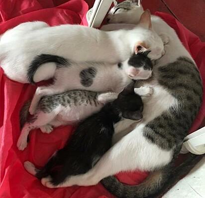 A foto publicada no grupo do facebook fez muitos internautas darem risada e se apaixonarem pela família felina.
