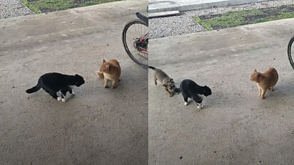 A confusão dos pets aconteceu em Goryachiy Kluch, na Rússia.