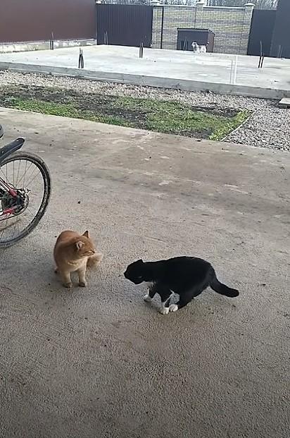 Os gatos se preparam para brigar, até a chegada do cãozinho Tuzik.