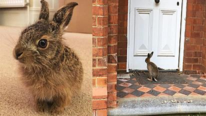 A lebre foi salva pela família Terry, de Goberston, Inglaterra.